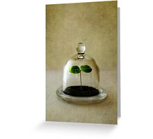 New life Greeting Card