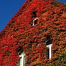 Decorated Facade by herbspics