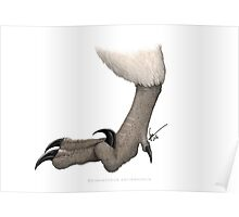 Deinonychus foot Poster