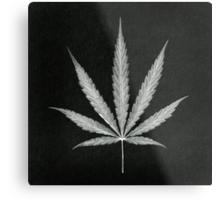 Cannabis Leaf Print  Metal Print