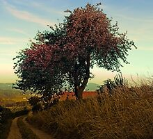 Hiking trail, tree and summer morning   landscape photography by Patrick Jobst