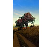 Hiking trail, tree and summer morning | landscape photography Photographic Print