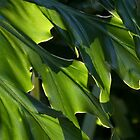 Filtered Sunlight (Philodendron selloum) by Kerryn Madsen-Pietsch