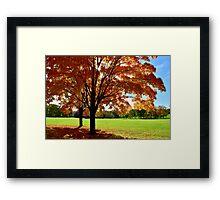 Sunlit Autumn Trees Framed Print