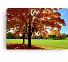 Sunlit Autumn Trees Canvas Print