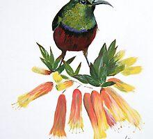 Sunbird by Lynda Harris