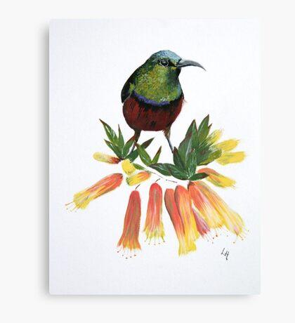 Sunbird Canvas Print