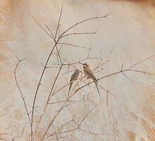 Bird Branch by Barbny