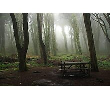 Magic forest with mist Photographic Print