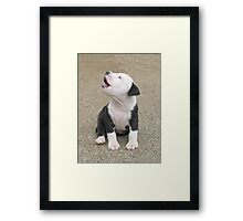 Oh Solo Mio !!! Framed Print