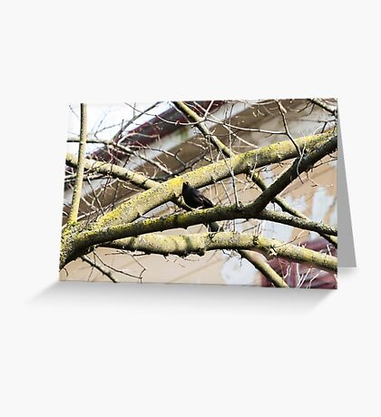 blackbird on tree Greeting Card
