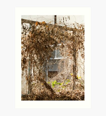 Old window in abandoned house Art Print