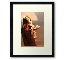 Baby Beardies Framed Print