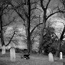 Cemetery Maintenance by Ben Loveday
