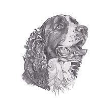 Classic English Springer Spaniel Dog Profile Drawing Photographic Print