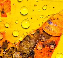 Drops of autumn by Manon Boily