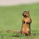 Fox Squirrel on Alert by Ben Waggoner