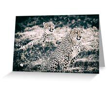 Cheetah Chums - Masai Mara, Kenya Greeting Card
