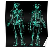 Anatomy: The Skeletal System -Sticker Poster