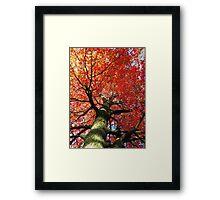 Red Maple 2016 Framed Print