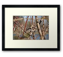 Bird Minimum Framed Print