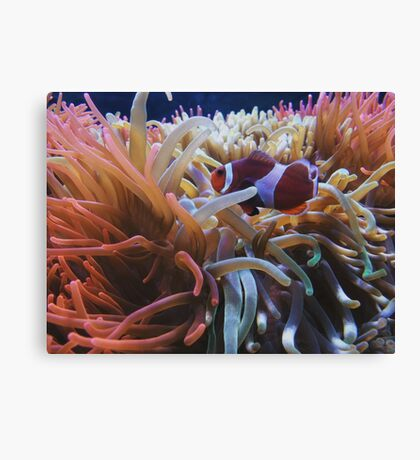 Rainbow Coral Canvas Print