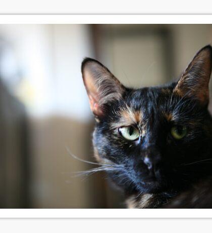 Cat 2 Sticker