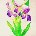 Irises.... by Renate  Dartois