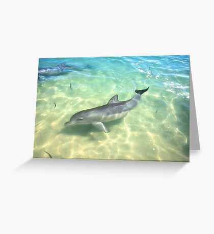 Samu 1 , Monkey Mia, Shark Bay Greeting Card