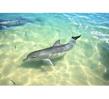 Samu 1 , Monkey Mia, Shark Bay Photographic Print
