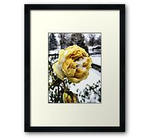 Yellow Rose in Winter Framed Print