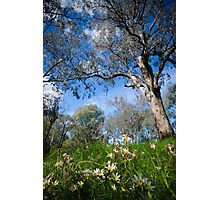 Springtime in Australia Photographic Print