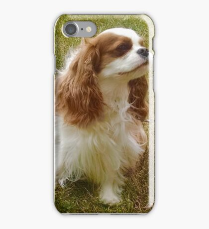 Rigby the King Charles Spaniel Cavalier iPhone Case/Skin