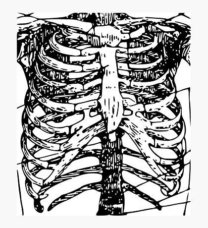 Skeletal System: Torso Photographic Print