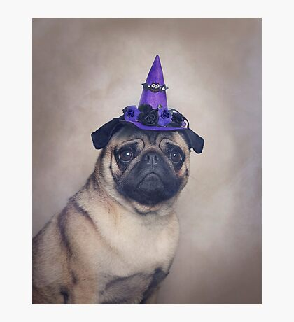 Peppa Pug Hates Halloween Photographic Print