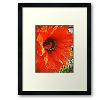 Flame Poppy Side View Framed Print