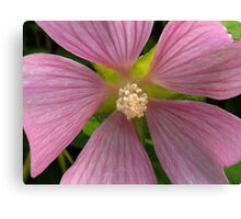 """Mallow"" Wildflower in the Shade Canvas Print"
