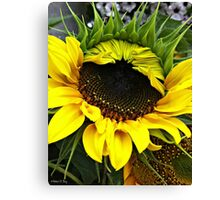 Golden Sunflower Bloom Canvas Print
