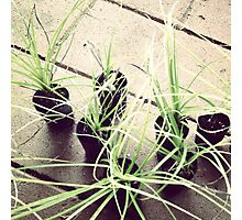 pots plants Photographic Print