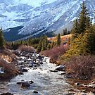 Elbow pass creek by zumi