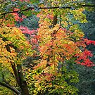 Autumn colours by Jeff  Wilson