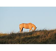 Sunset Grazing Photographic Print