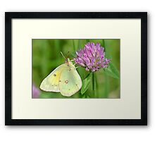 The Beauty All Around Us Framed Print
