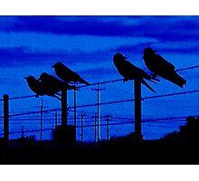Blue Crows Photographic Print