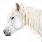 Pencil Portrait of a Pony  by Karen Sagovac