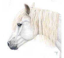 Pencil Portrait of a Pony  Photographic Print