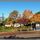 AUTUMN IN BIRCHWOOD. by ronsaunders47