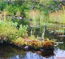 Lake Study by NEKROS