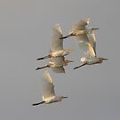 Egrets At Dusk  by byronbackyard