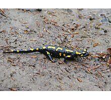Carpathian Salamander Photographic Print